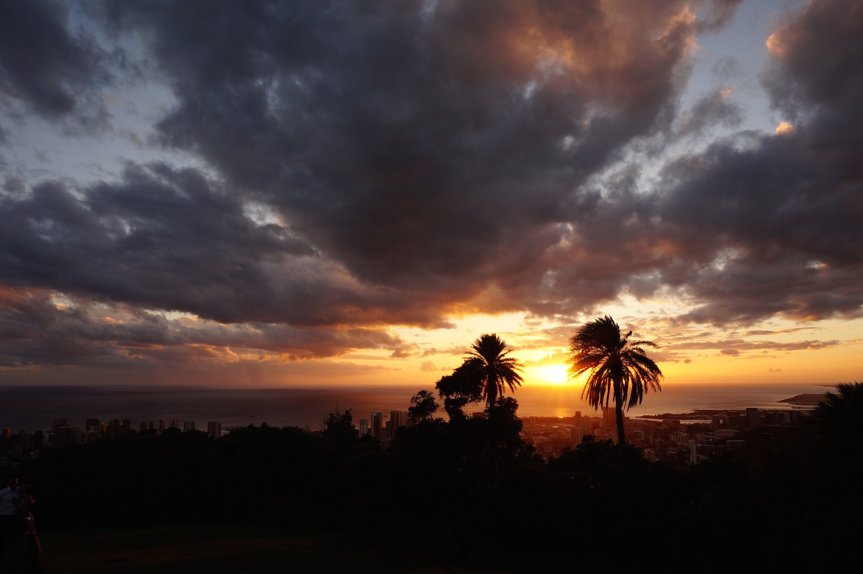 luzod-design-co-mae-sunset-palms.jpg