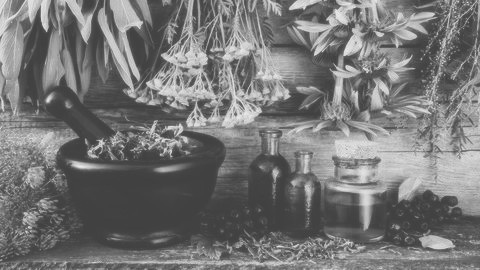 Herbalism (Foundations of Herbal Medicine) - Click image to learn more