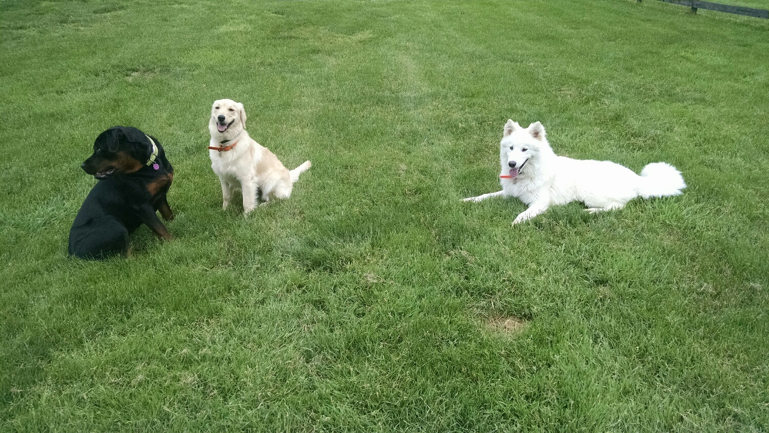 Start the day with a little play time with friends