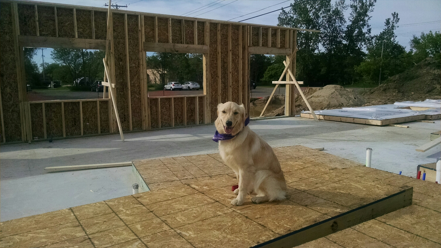Checking on Canine Academy's new construction