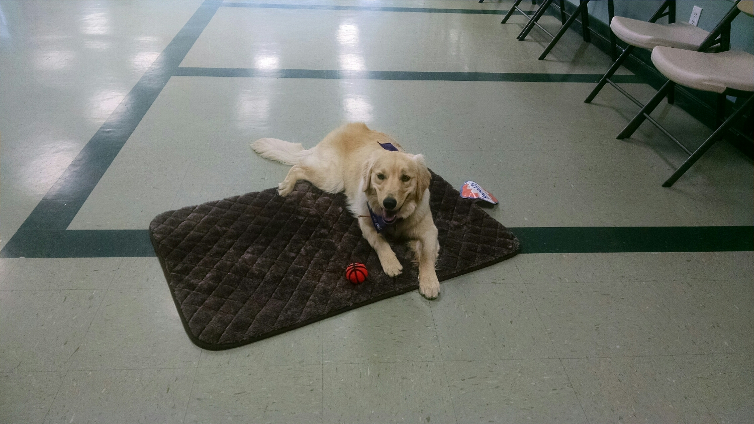 Be the demo dog at the Intermediate Class