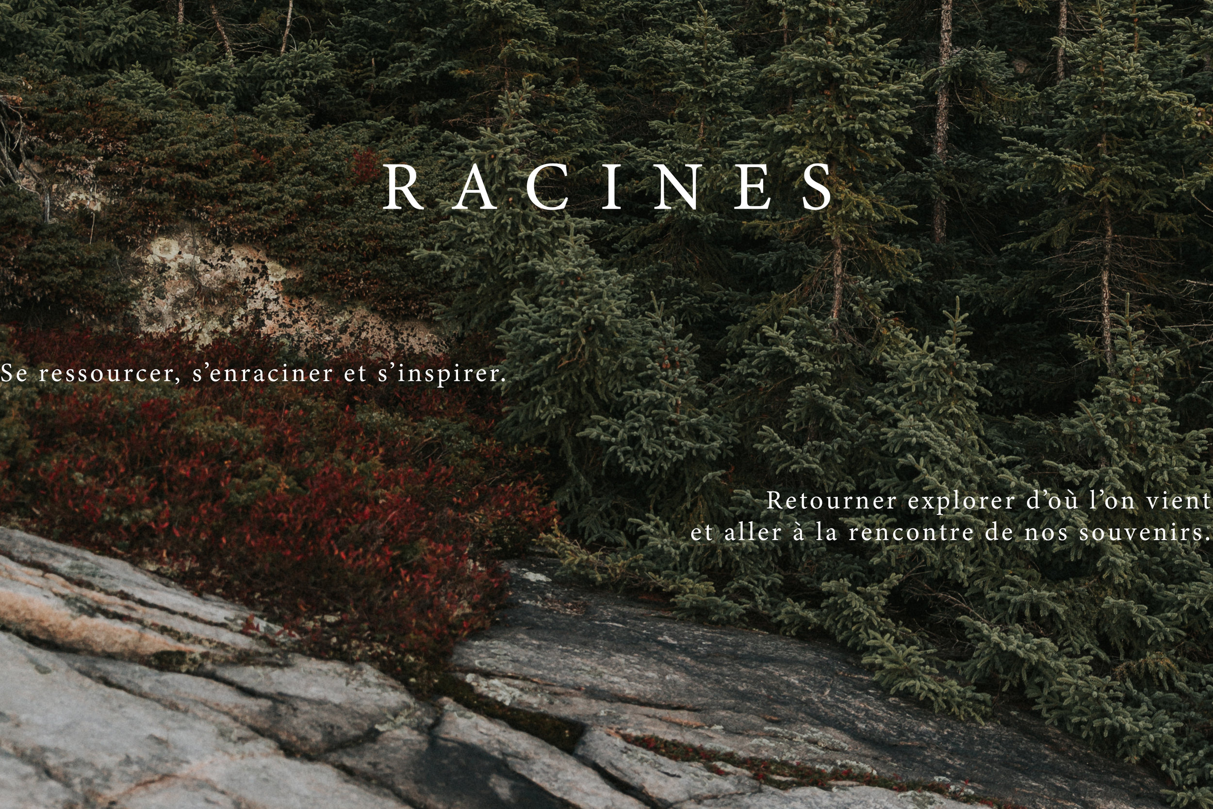 racines-1.jpg