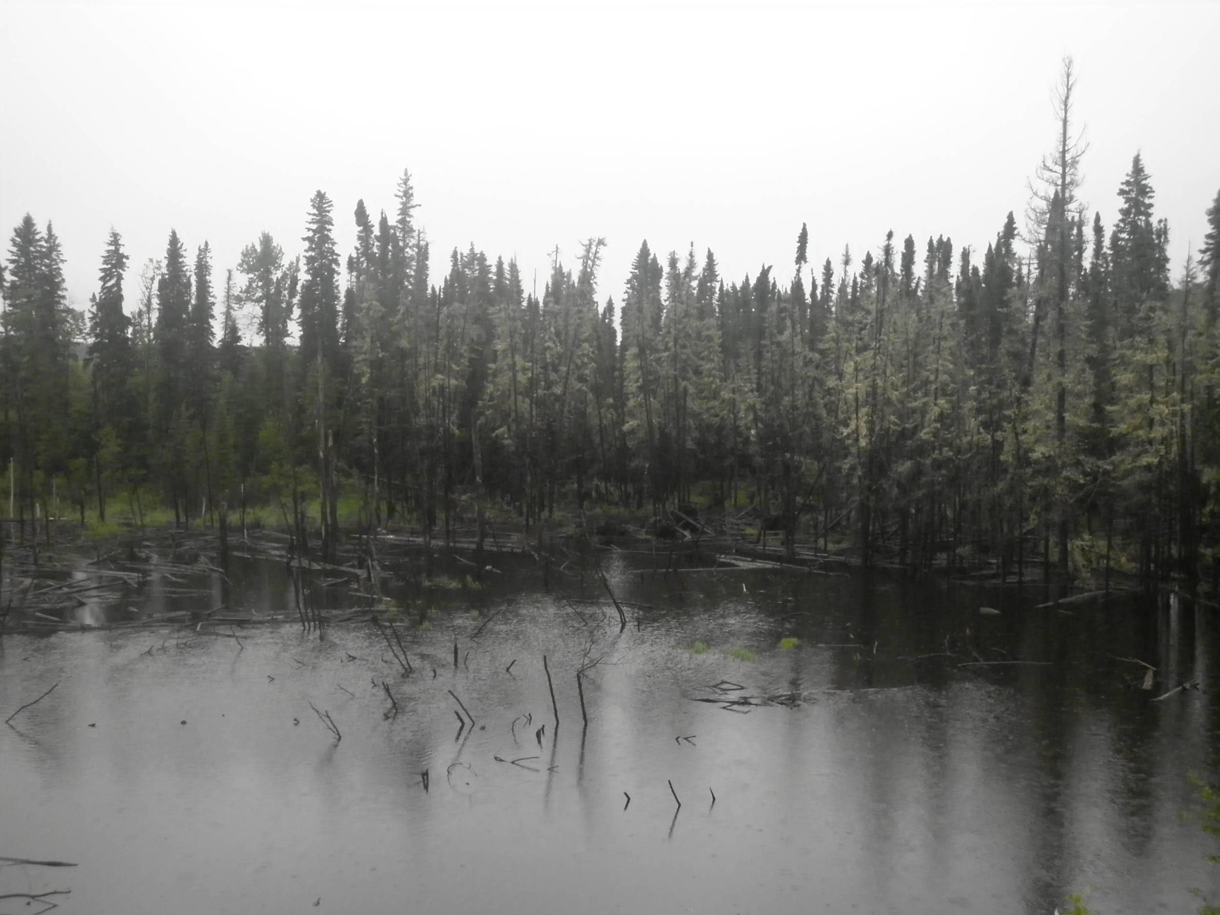 21 - McDougall Creek