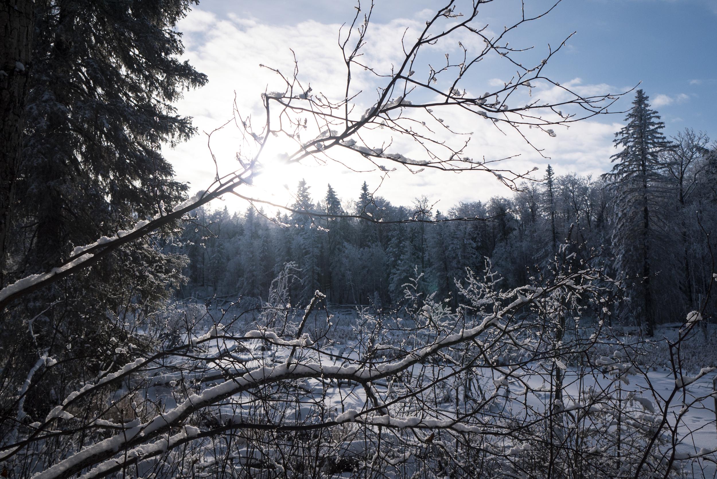 more-winters.jpg