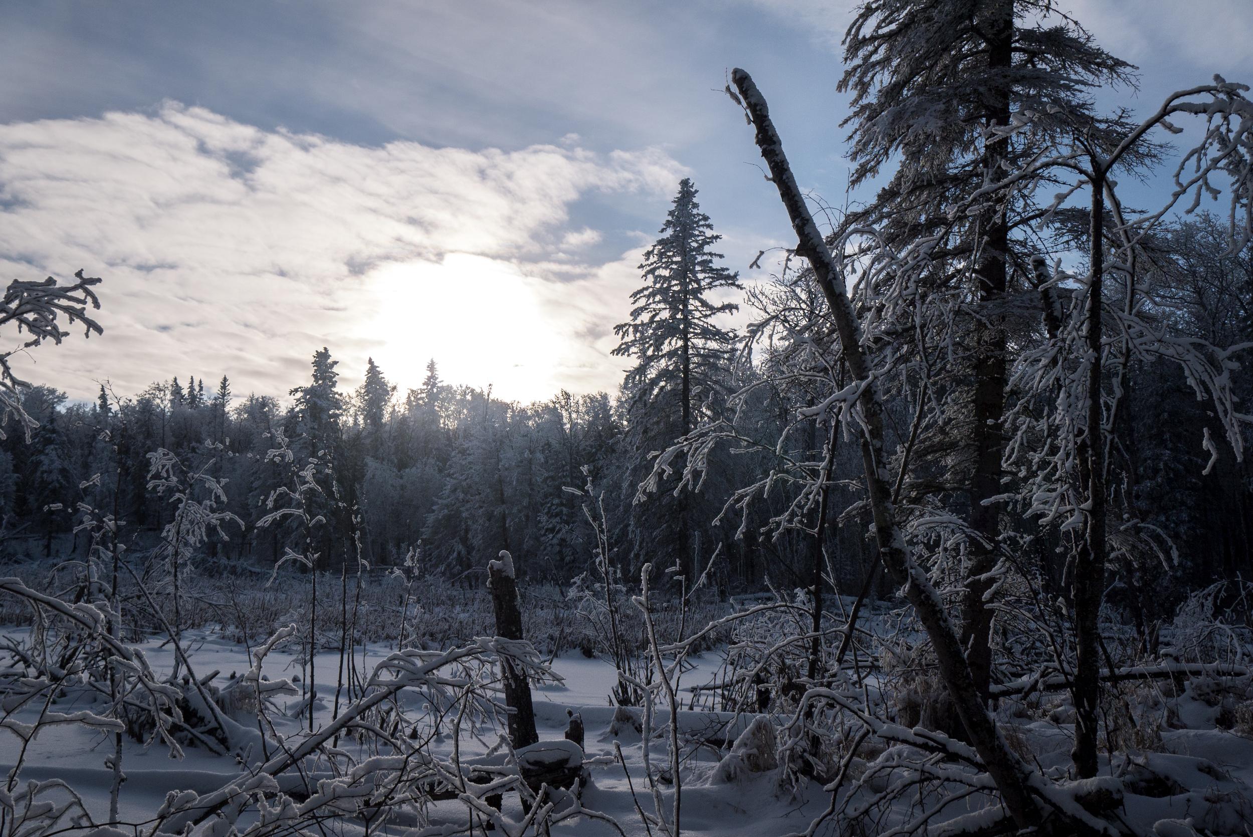 winterkilll.jpg