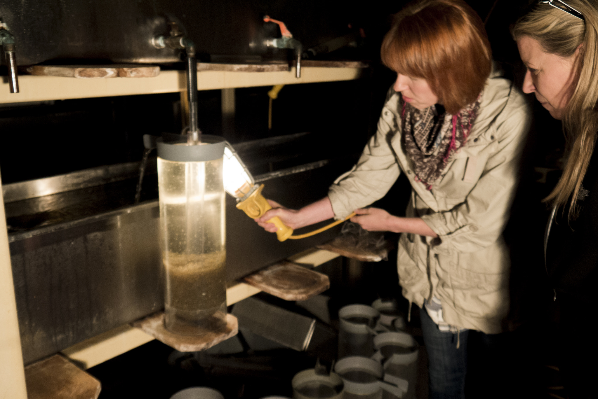 "Rachel Birns - Program Support at the Fish Culture Station - sheds some light on ""jar-cultured"" walleye fry."