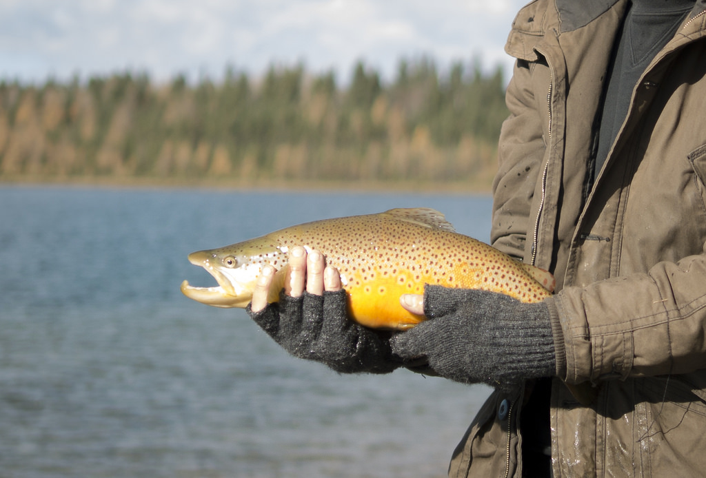 Sean's first brown trout [pure luck]