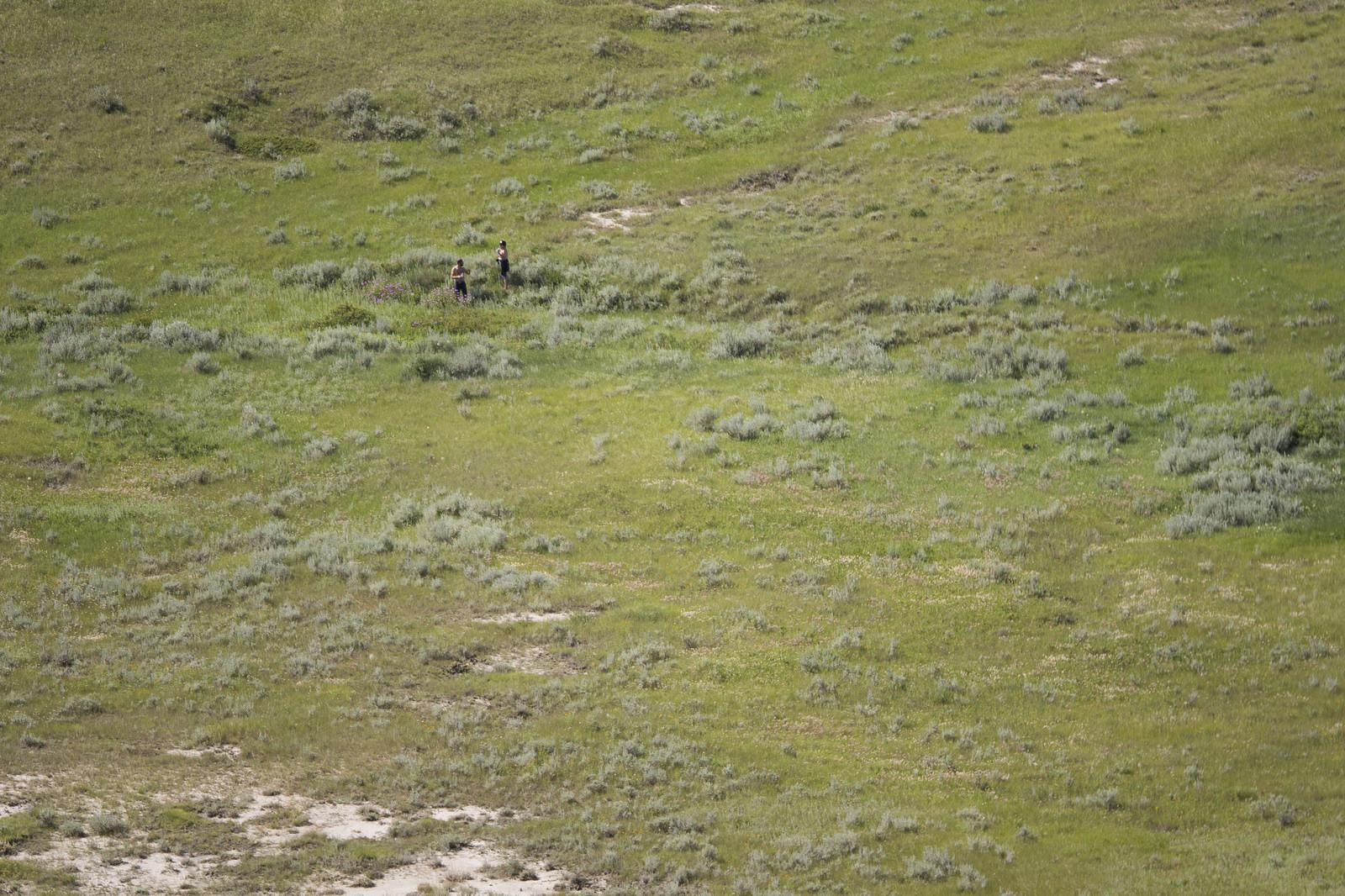 A couple wandering through the grass.