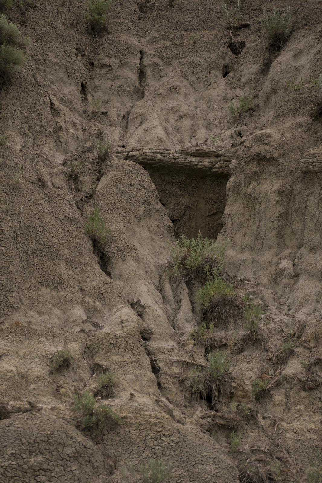 A dense layer creates a natural shelf in a wall of eroded sandstone.