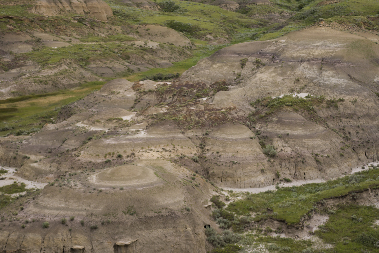 Sandstone buttes and outcrops in the Killdeer Badlands (aka Rock Creek badlands) expose layers of sediment that mark 60 million years of geological history. The darkest colouring marks the    Creataceous-Paleogene boundary   , seen at higher elevations in the grasslands and nearby sites such as    Zahursky Point   .