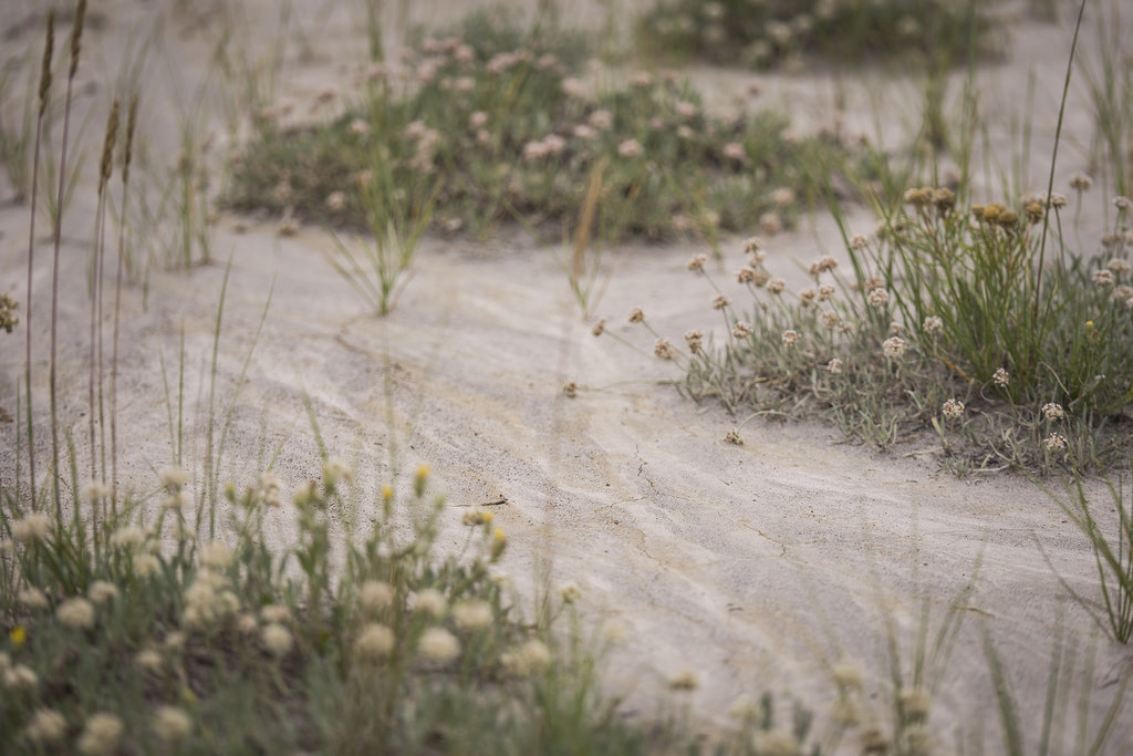 Patches of smooth, packed sand near the foot of eroded hillsides.