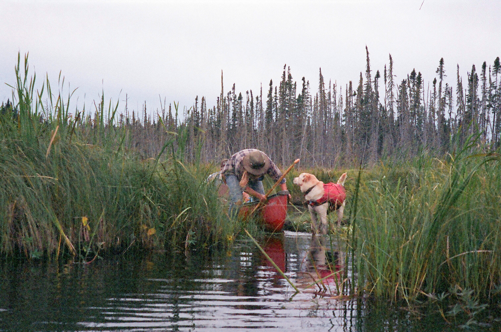 A dead end. Floating marshes block the way to the South Steeprock portage. (Hootz)