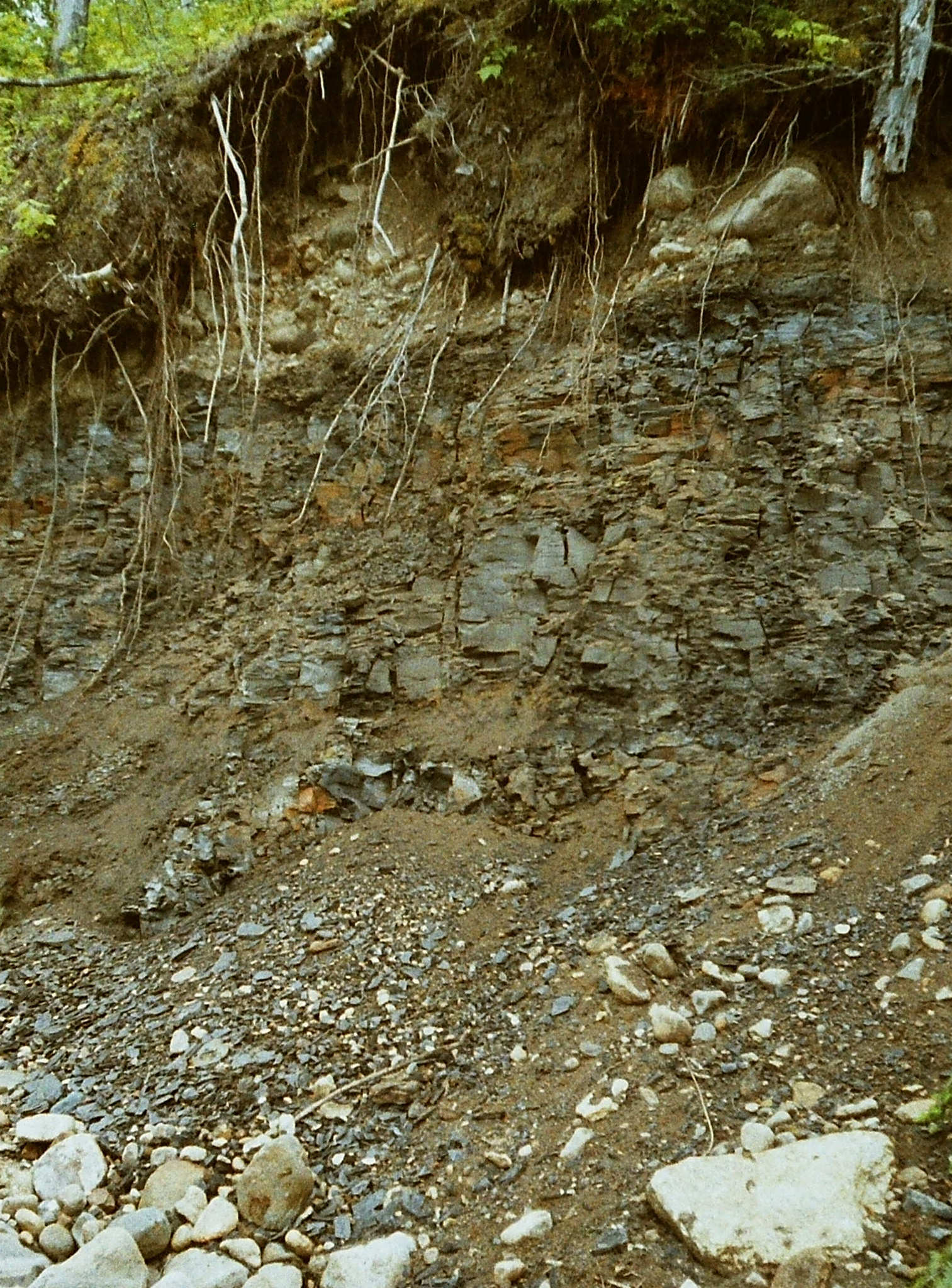 A shale outcrop in the Pasquia Hills, Saskatchewan, approximately 93 million year old .  (Vanin)