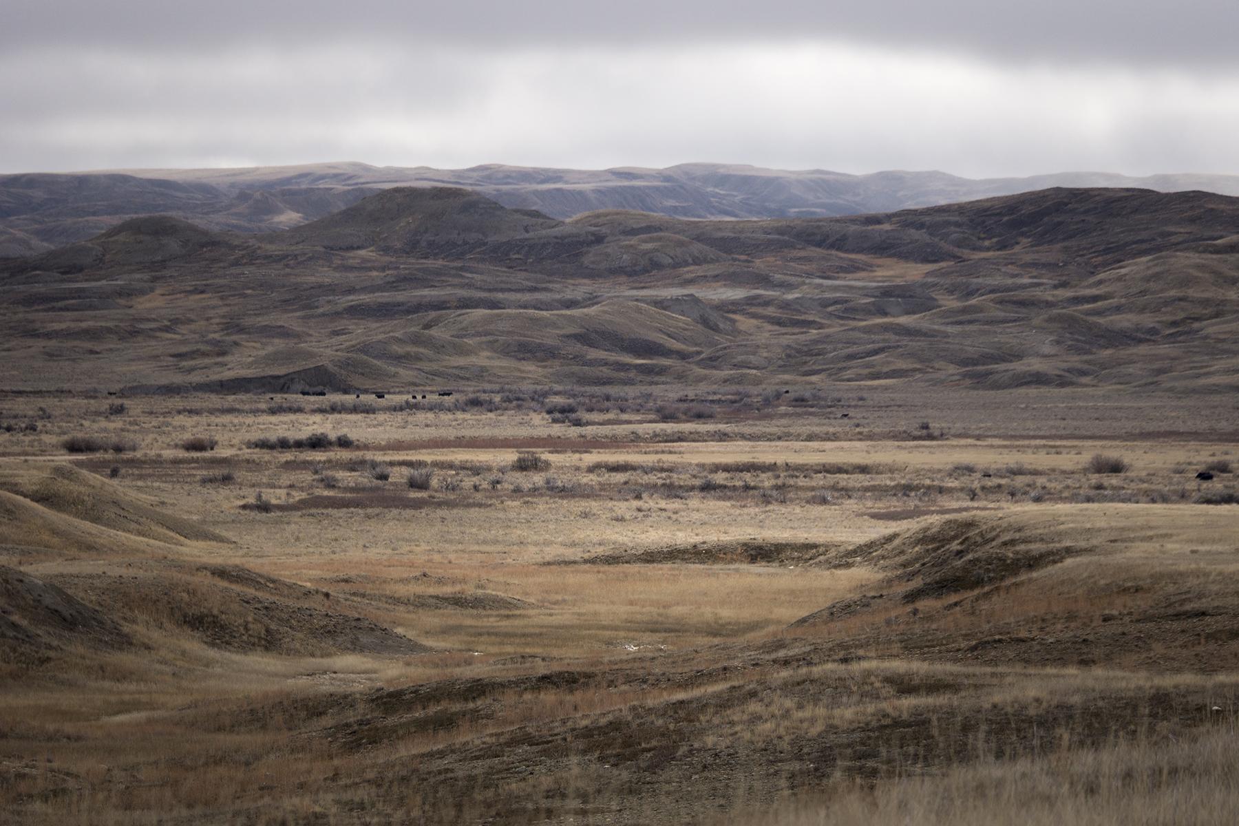 Pastures (Goodson)