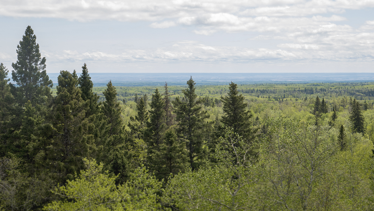 The Manitoba lowlands as seen from Baldy Mountain, north of Grandview. (Goodson)