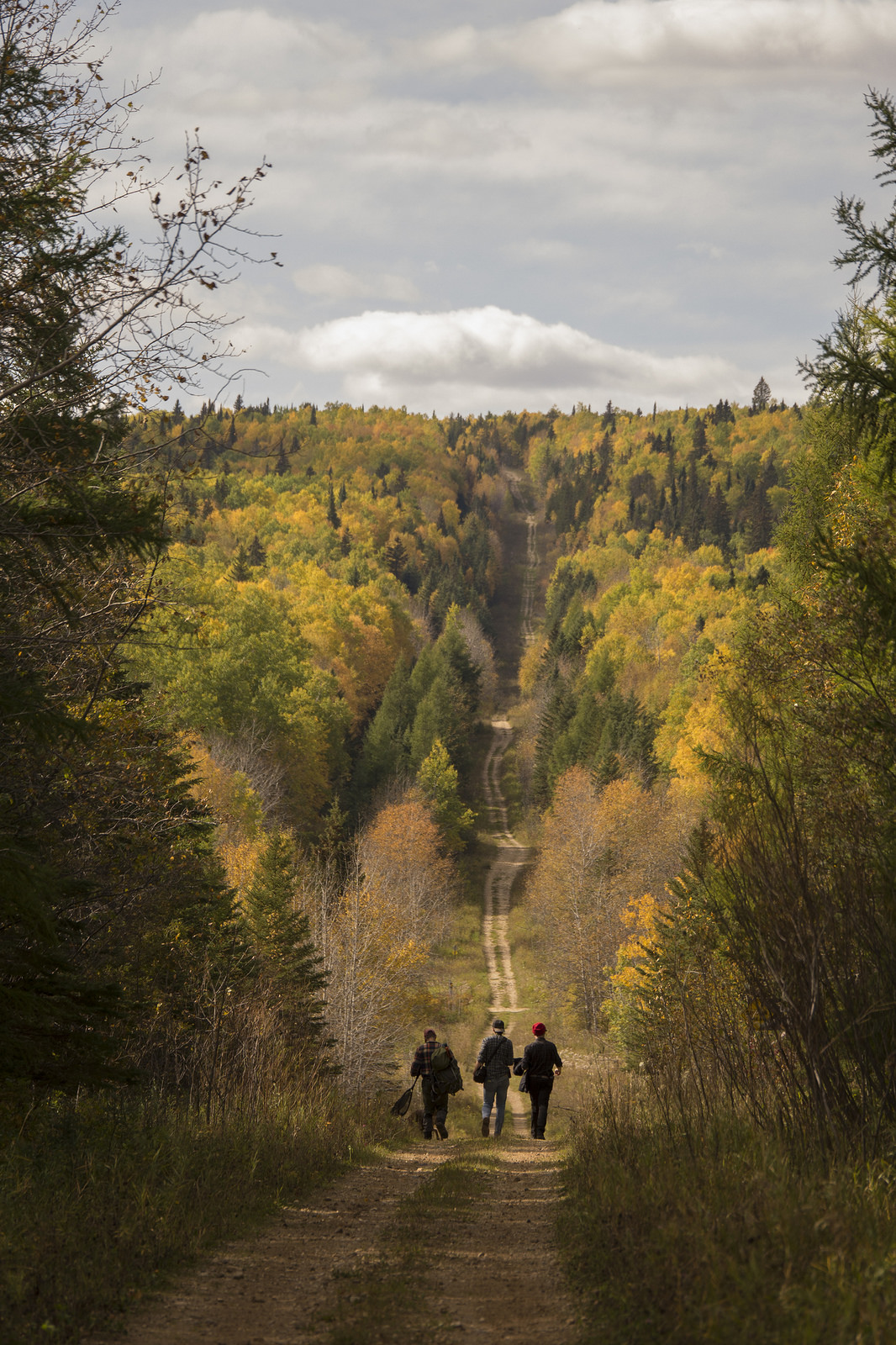 """""""Road to The Pine"""" Duck Mountain, Manitoba"""