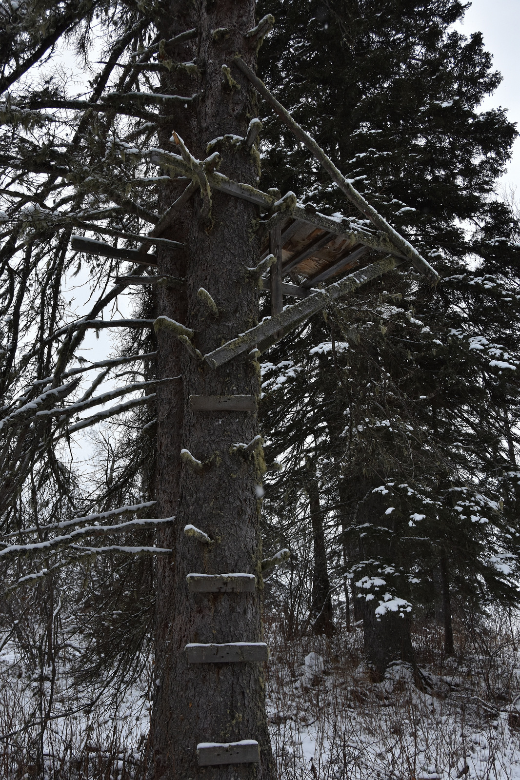 An old, totally-still-safe, tree stand. (Hootz)