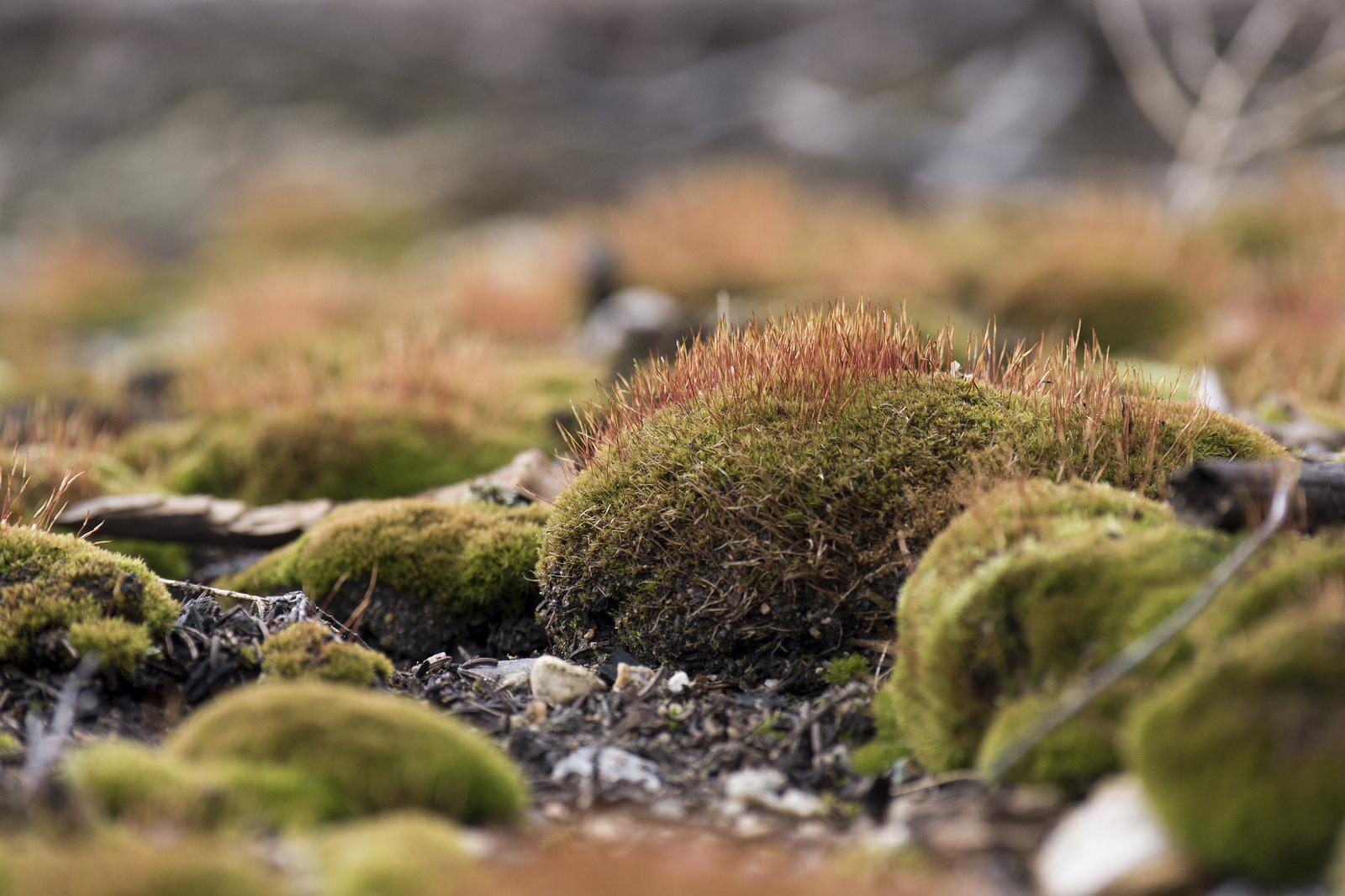 Moss balls (Goodson)