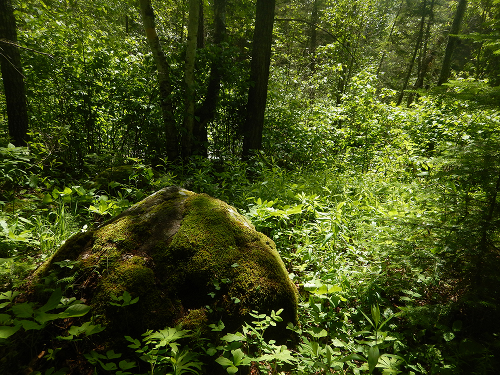 Mossy boulders (Sawkiw)