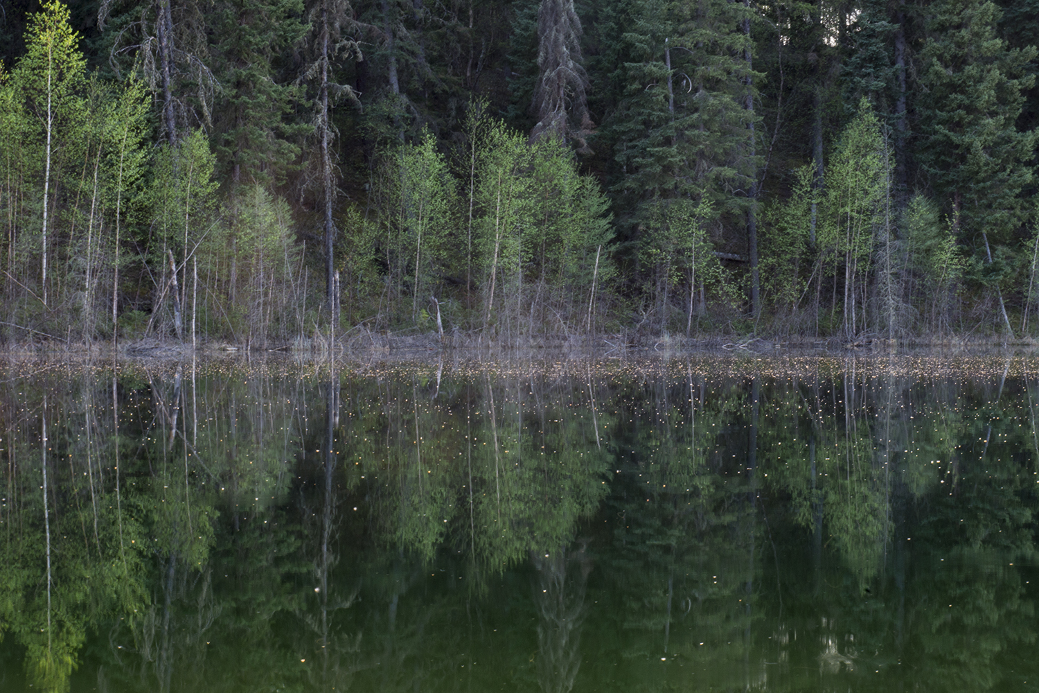 Reflections on Opal Lake, Narrow Hills Provincial Park