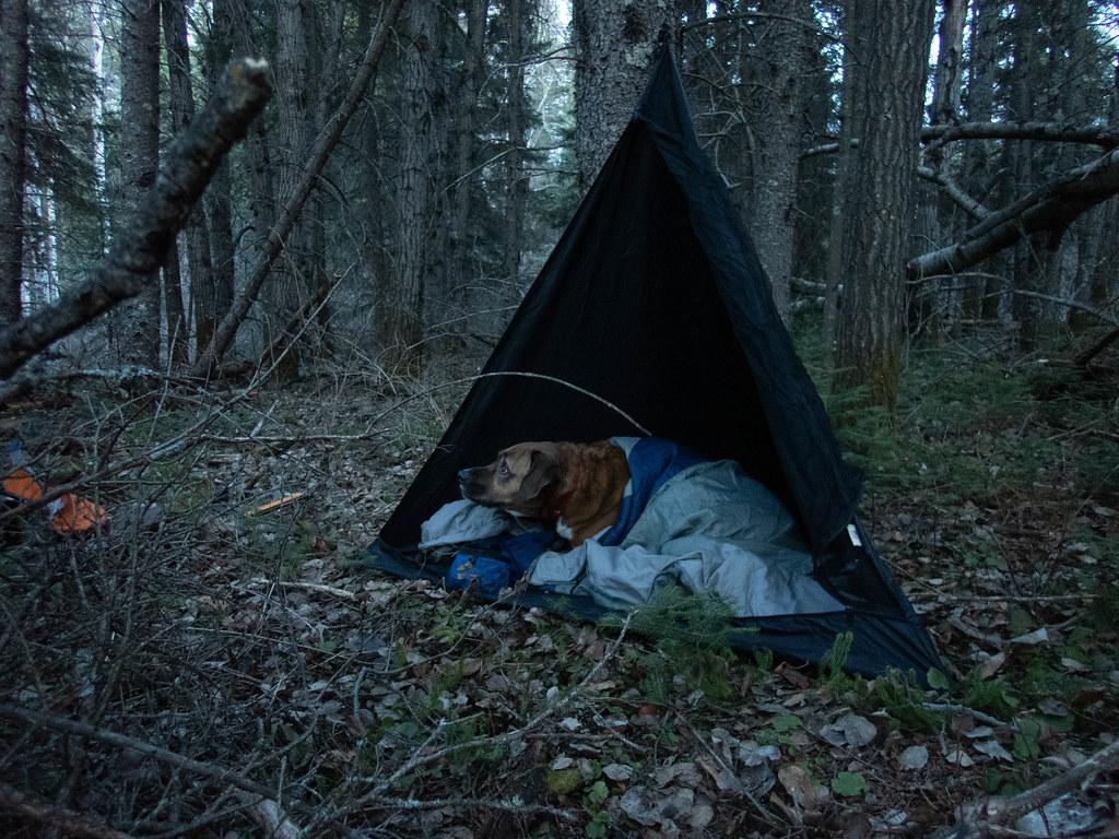 J.P.'s tent, the bear-sized Toblerone (Hootz)