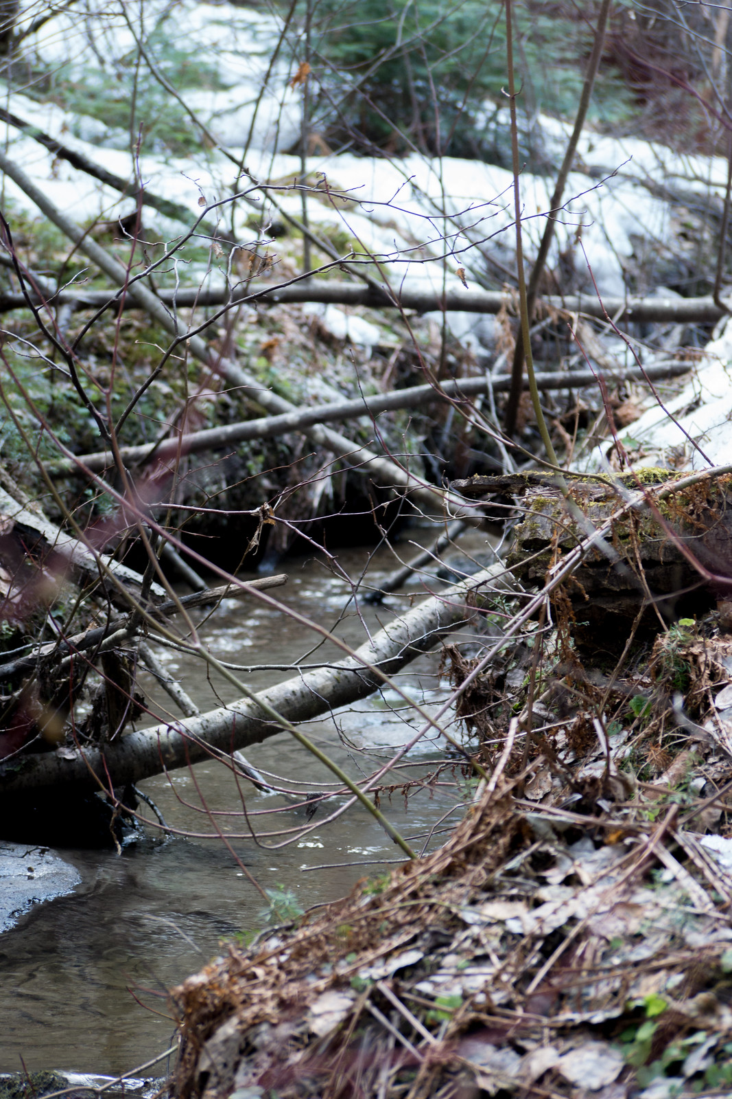 The water source, a spring runoff creek (Goodson)