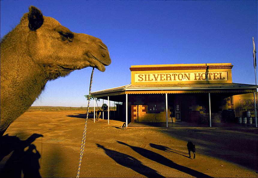 P10-camel_860.jpg