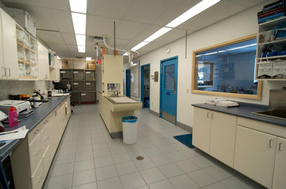 This is the treatment room where surgical patients are prepared, blood samples are taken and minor procedures performed.