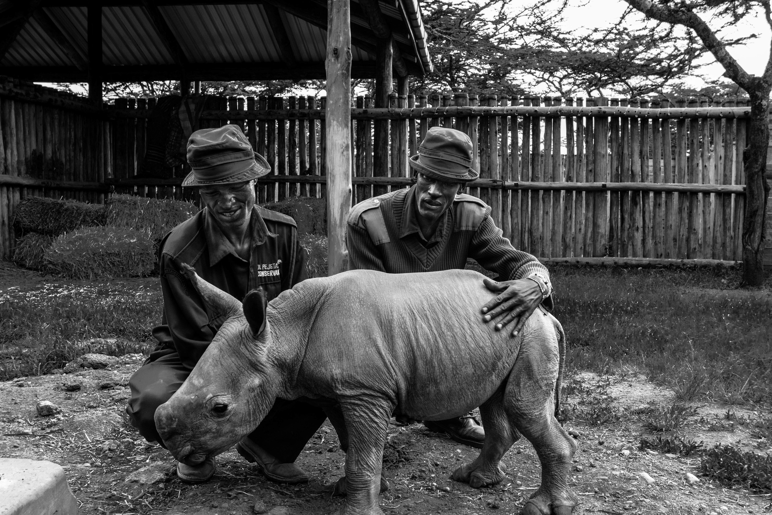 Zachary and Esogon with a baby white rhino they've been nursing back to full health. They've been feeding him every 4 hours and sleeping next to him every night.