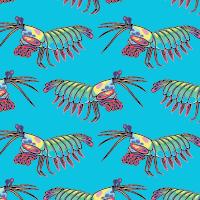 MantisShrimp.png