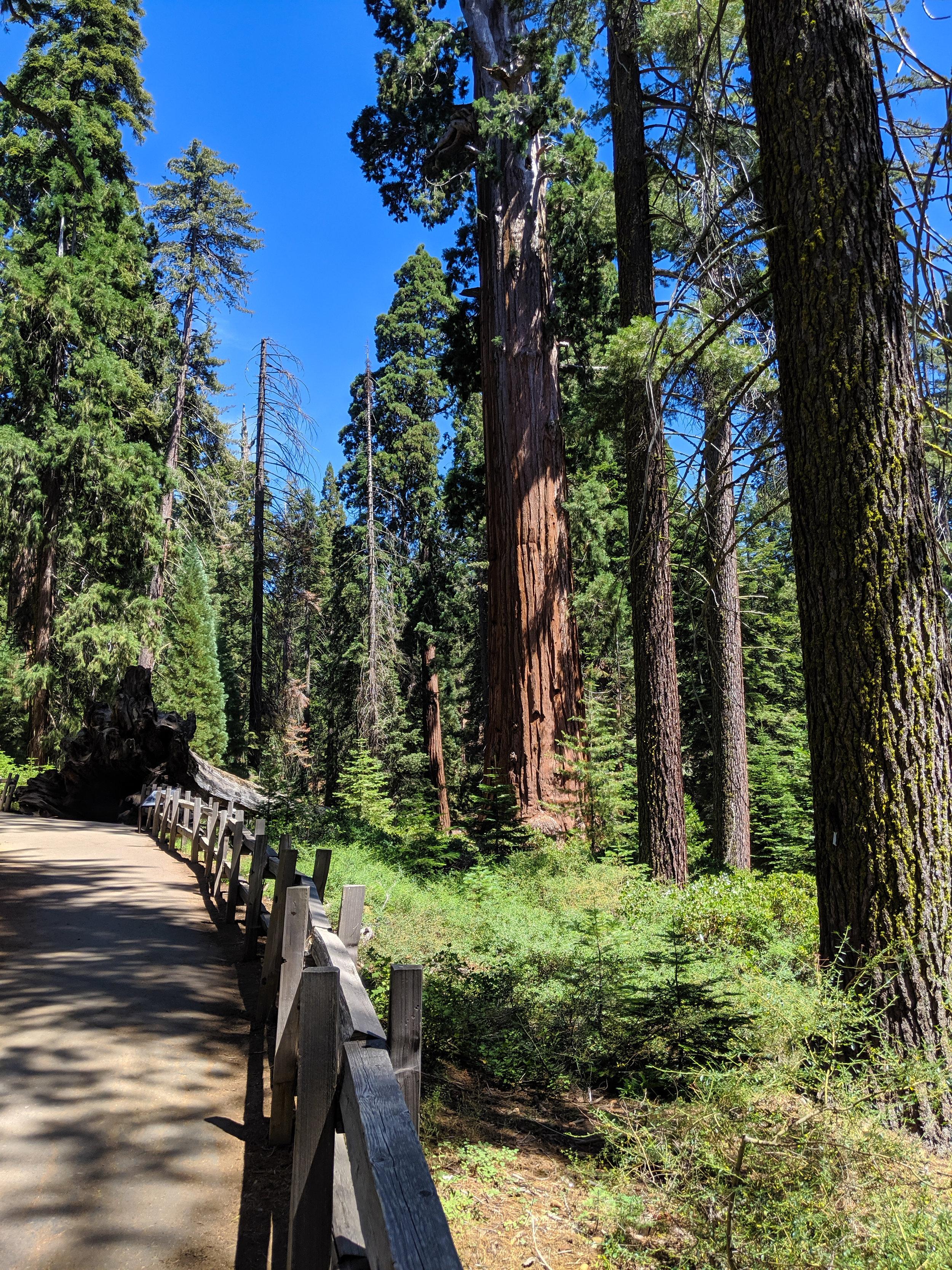 Kings Canyon, Grants Grove, Kings Canyon National Park, CA National Parks