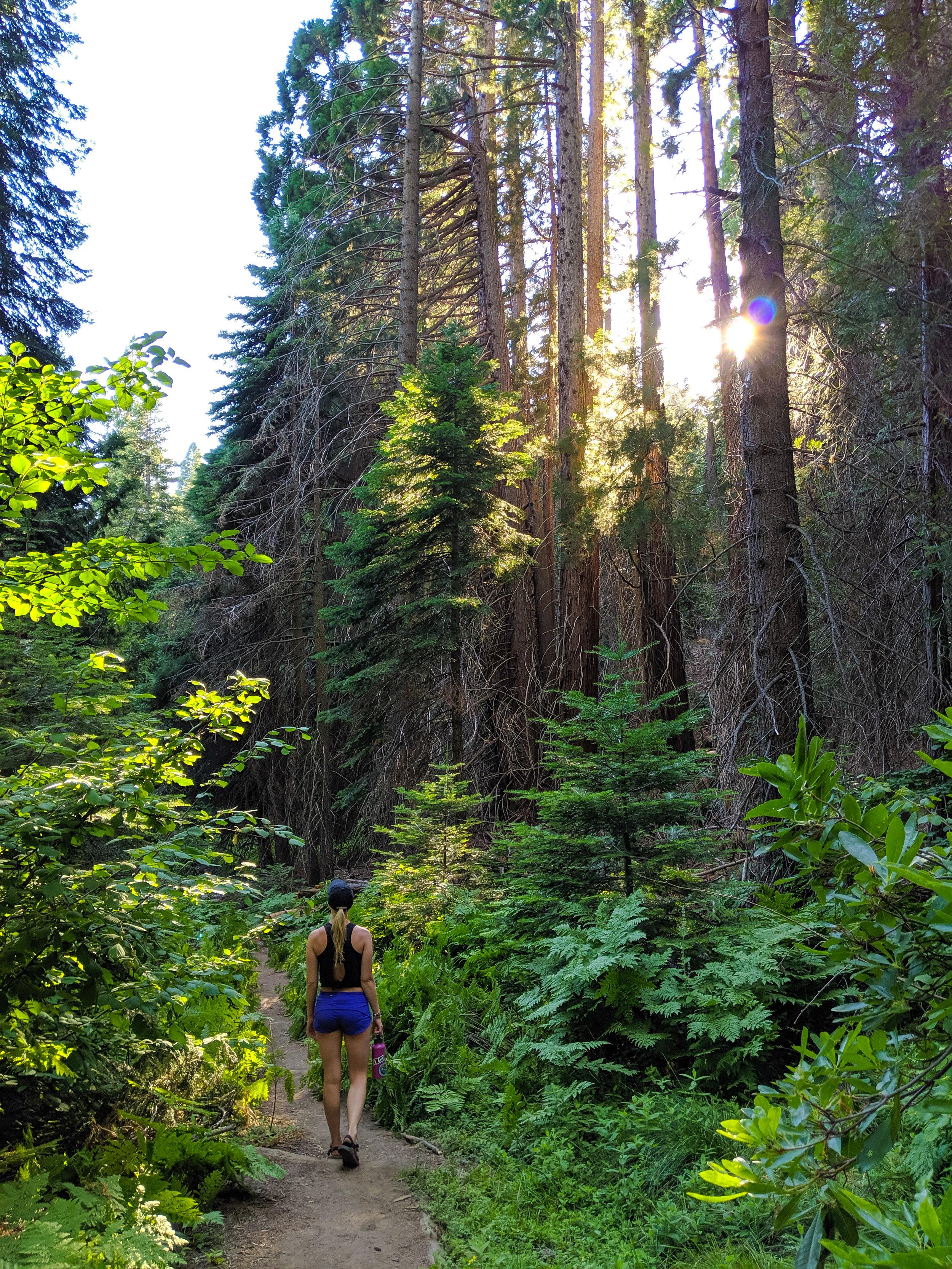 Big Stump Trail, Kings Canyon, Kings Canyon National Park, CA National Parks