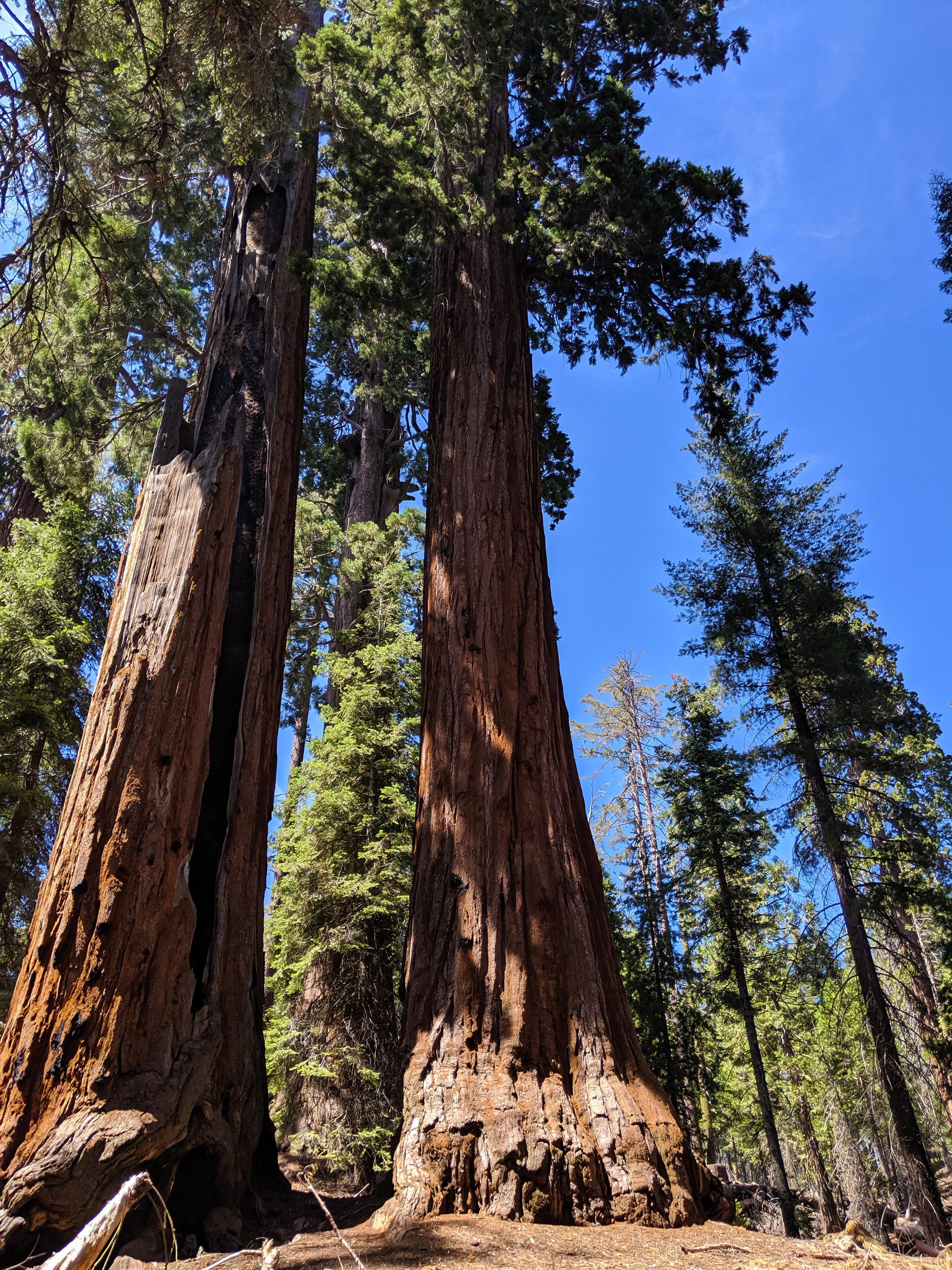 Grants Grove, Kings Canyon, Kings Canyon National Park, CA National Parks