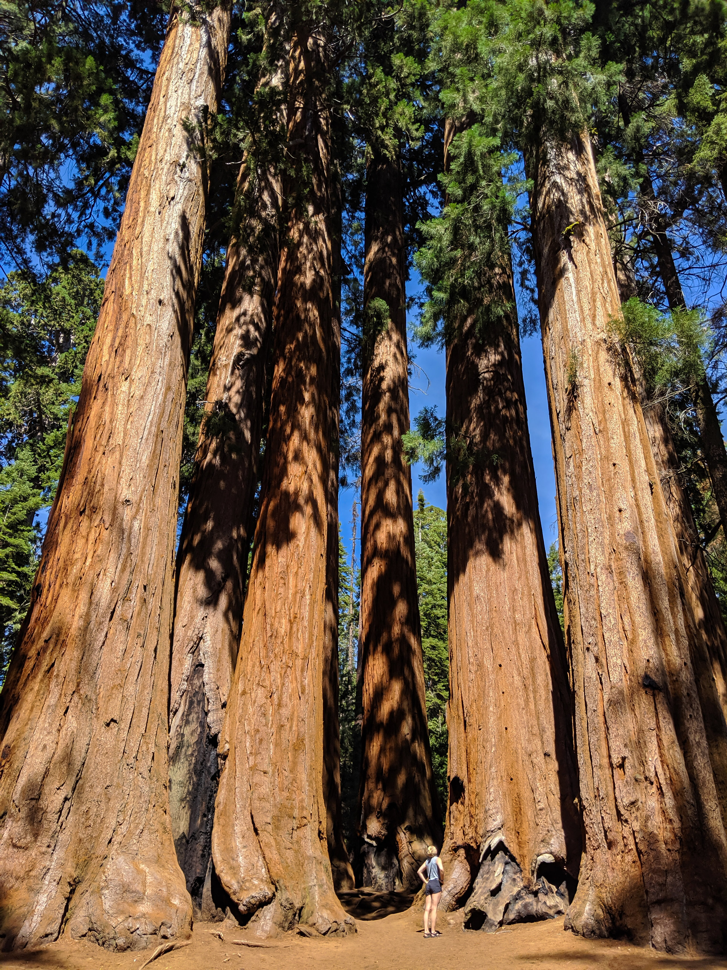 The Parker Group, Parker Group, Sequoia National Park, Sequoia, CA National Parks