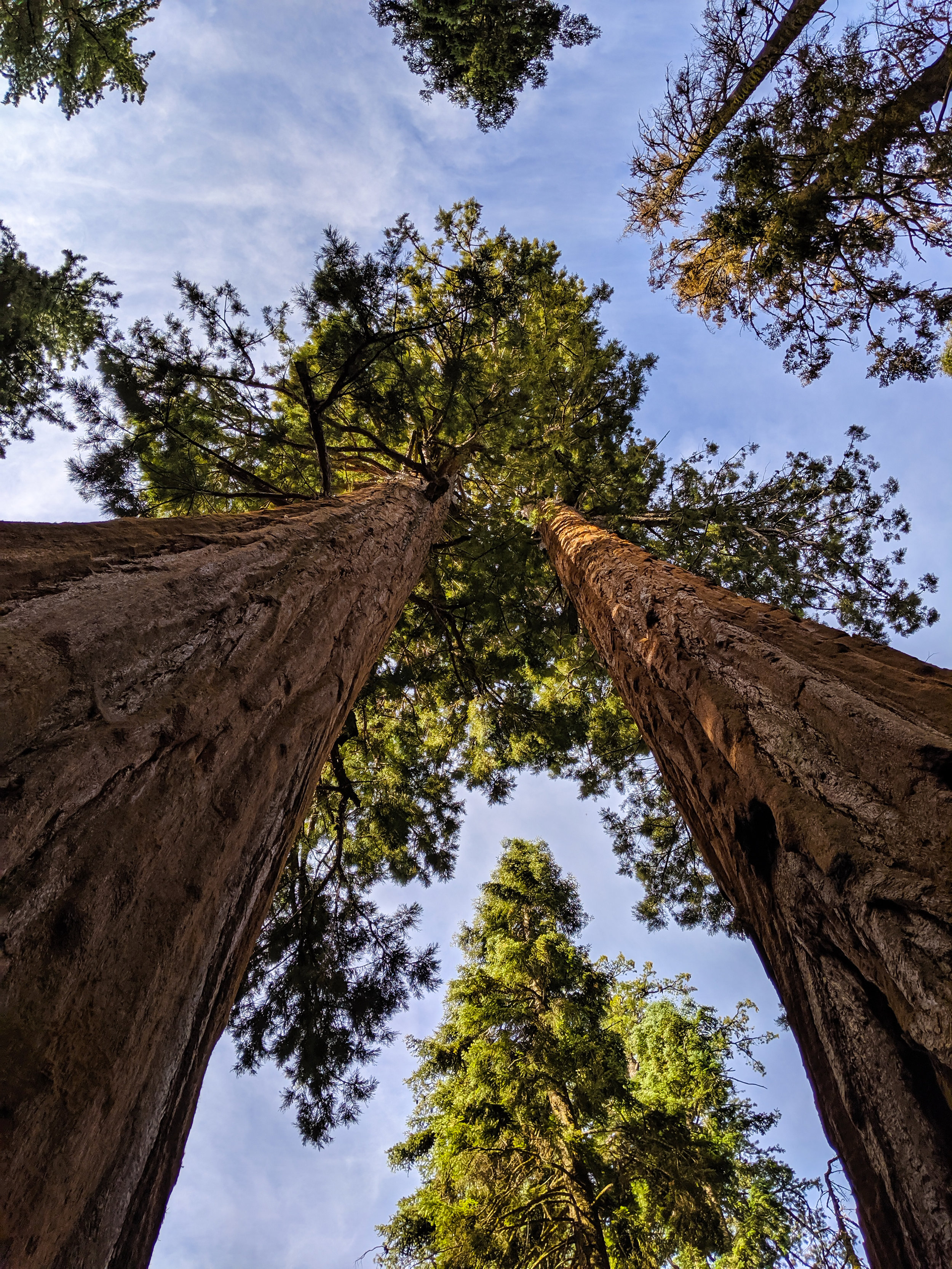 The Parker Group, Parker Group, Sequoia, Giant Sequoia, Sequoia National Park