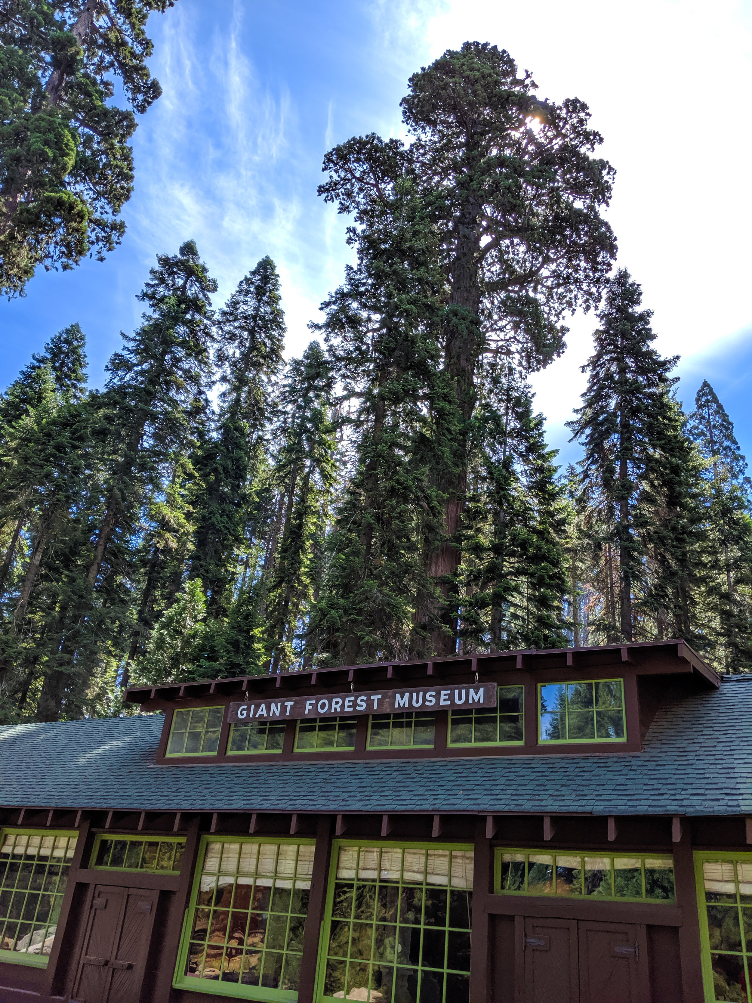Giant Forest Museum, Giant Forest, Sequoia, Giant Sequoias, Sequoia National Park, CA National Parks