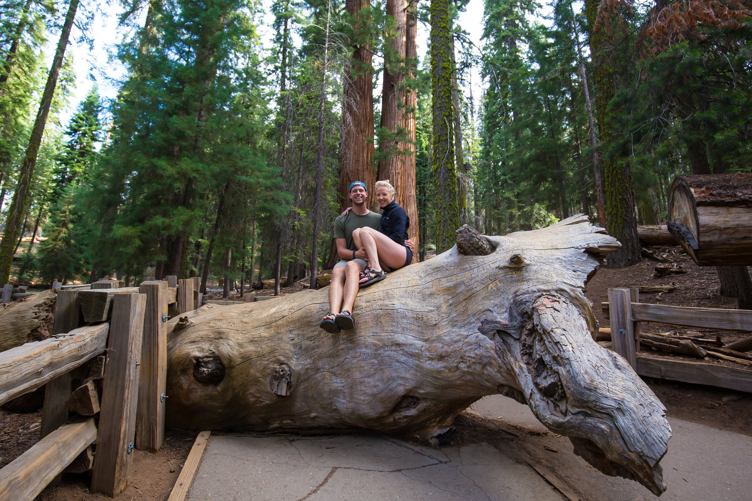 General Sherman, Giant Forest, Sequoia, Giant Sequoia, Sequoia National Park, CA National Parks