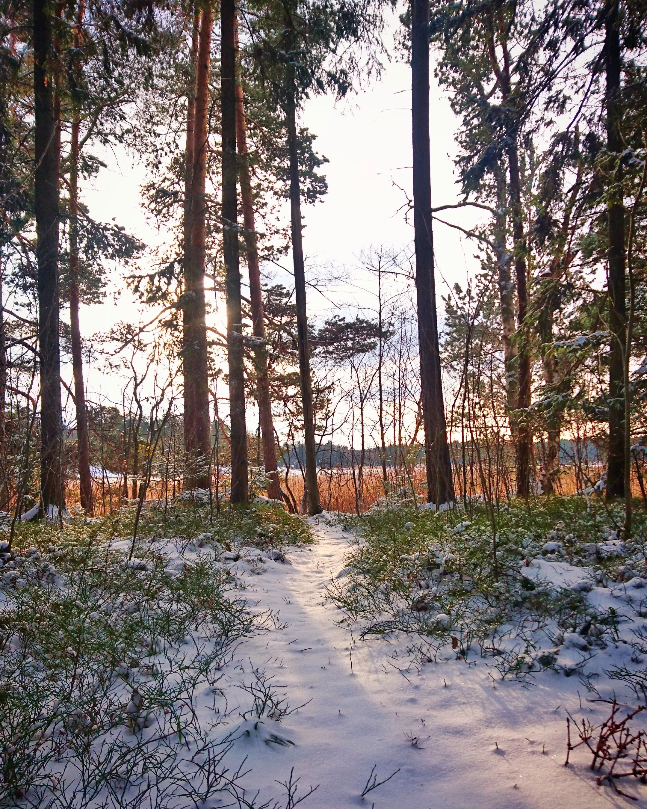 Talvi tuli marraskuun alussa