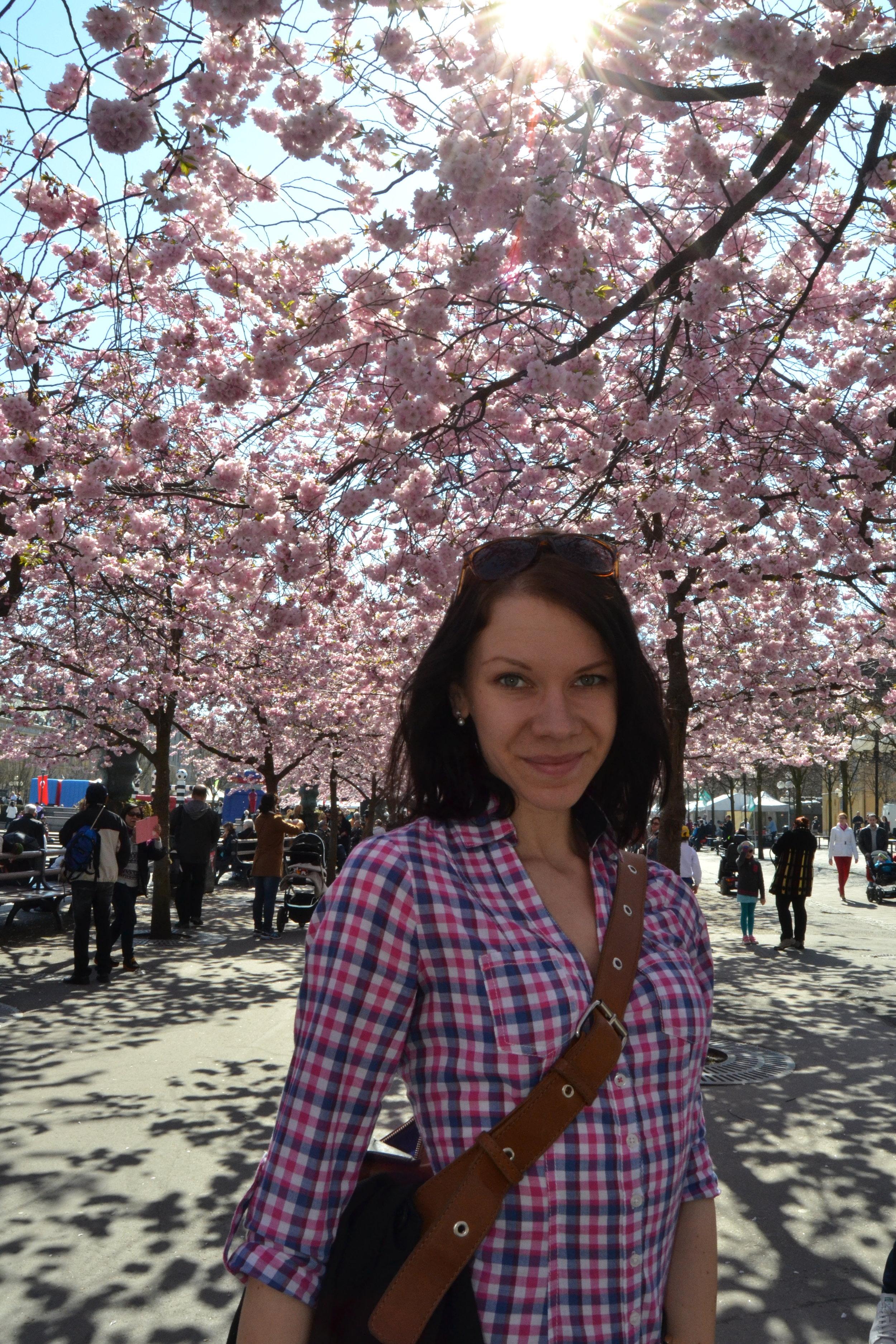 Kirsikankukkaloistoa Tukholmassa