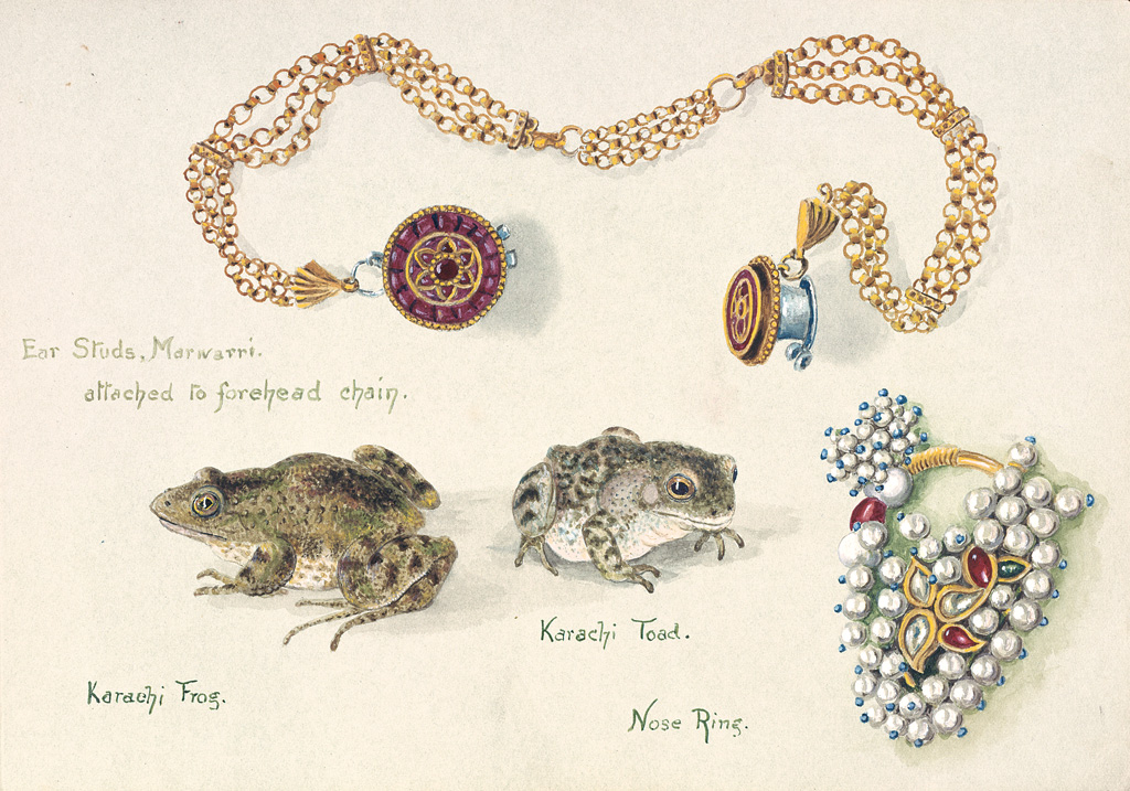 """Schmuck, ein Frosch und eine Kröte"" von Olivia Tonge @ The Trustees of the Natural History Museum, London"