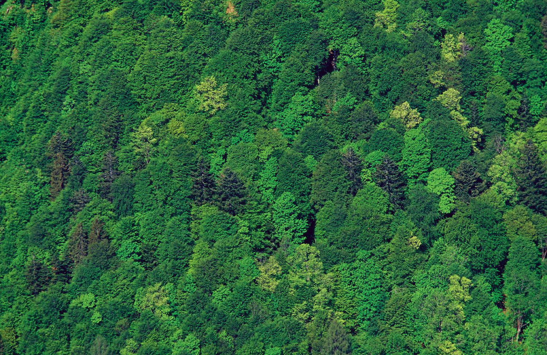 Laub- Nadelmischwald © Franz Pritz/Bundesforste