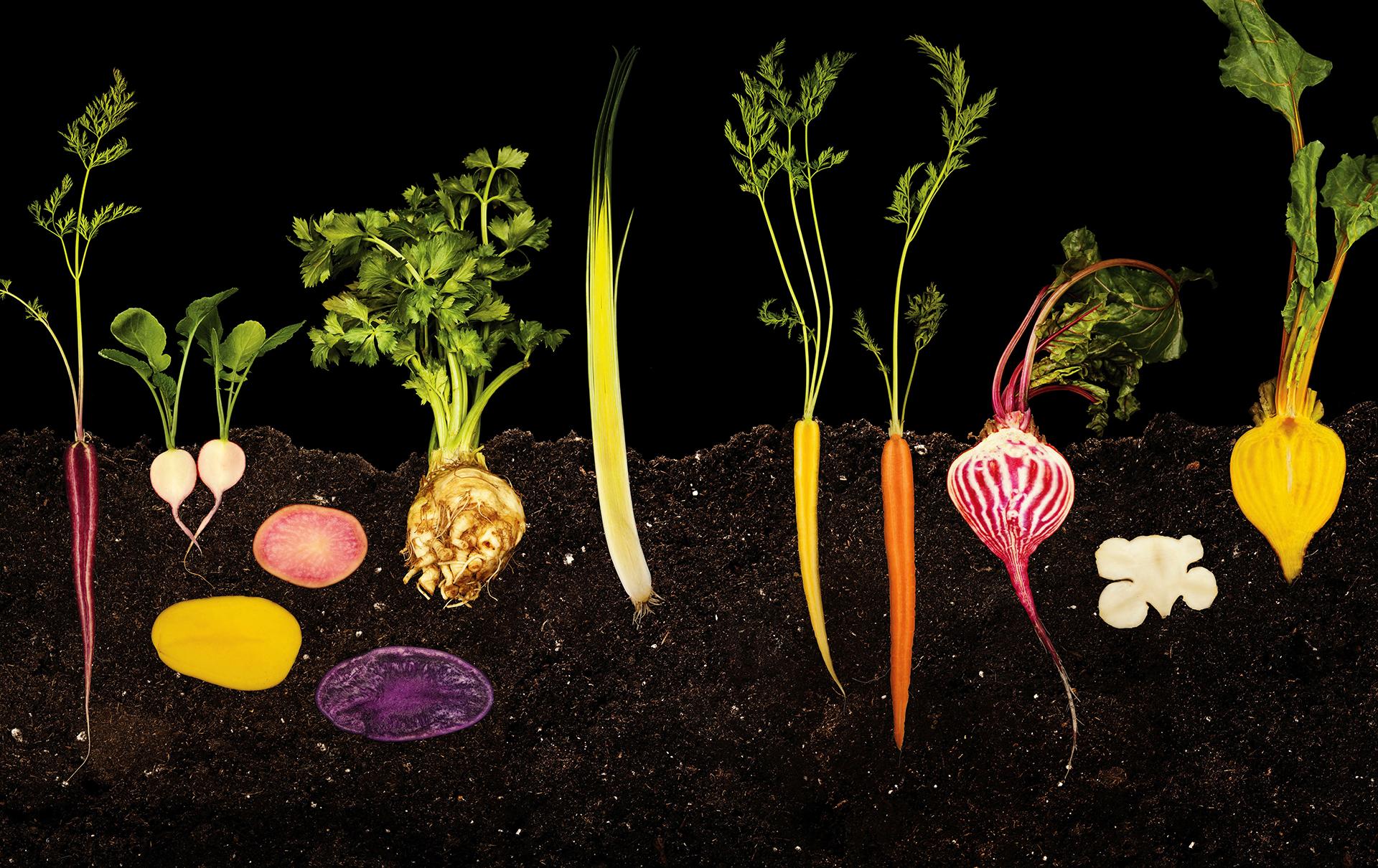 Die Zukunft: Kraut und Rüben © Ryan Matthew Smith/Modernist Cuisine, LLC