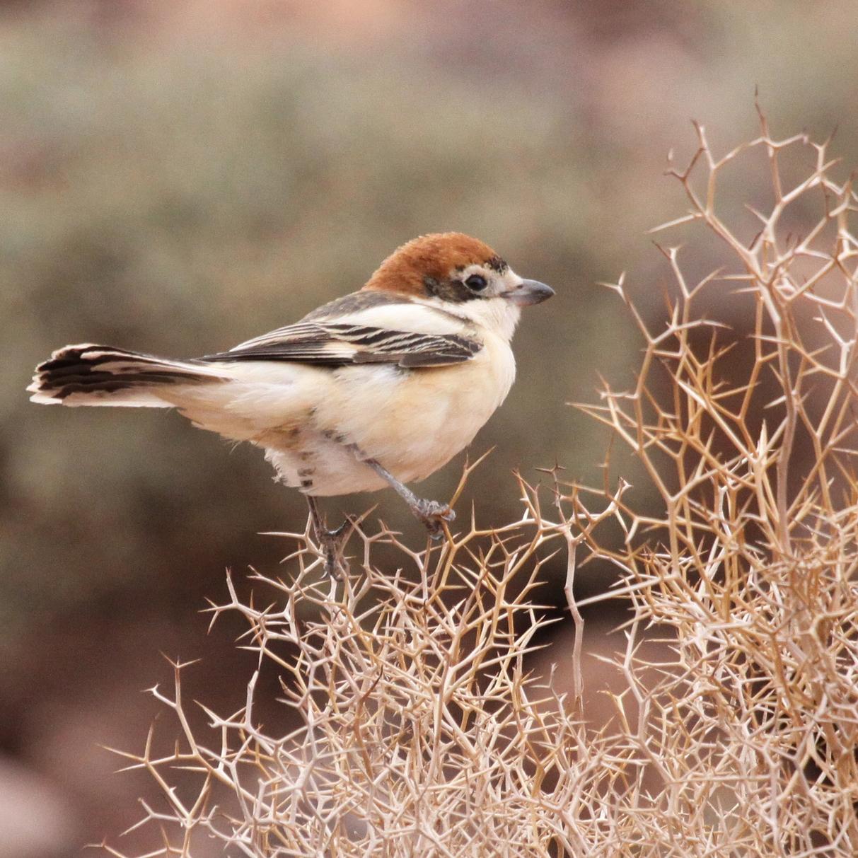 cutie bird.jpg