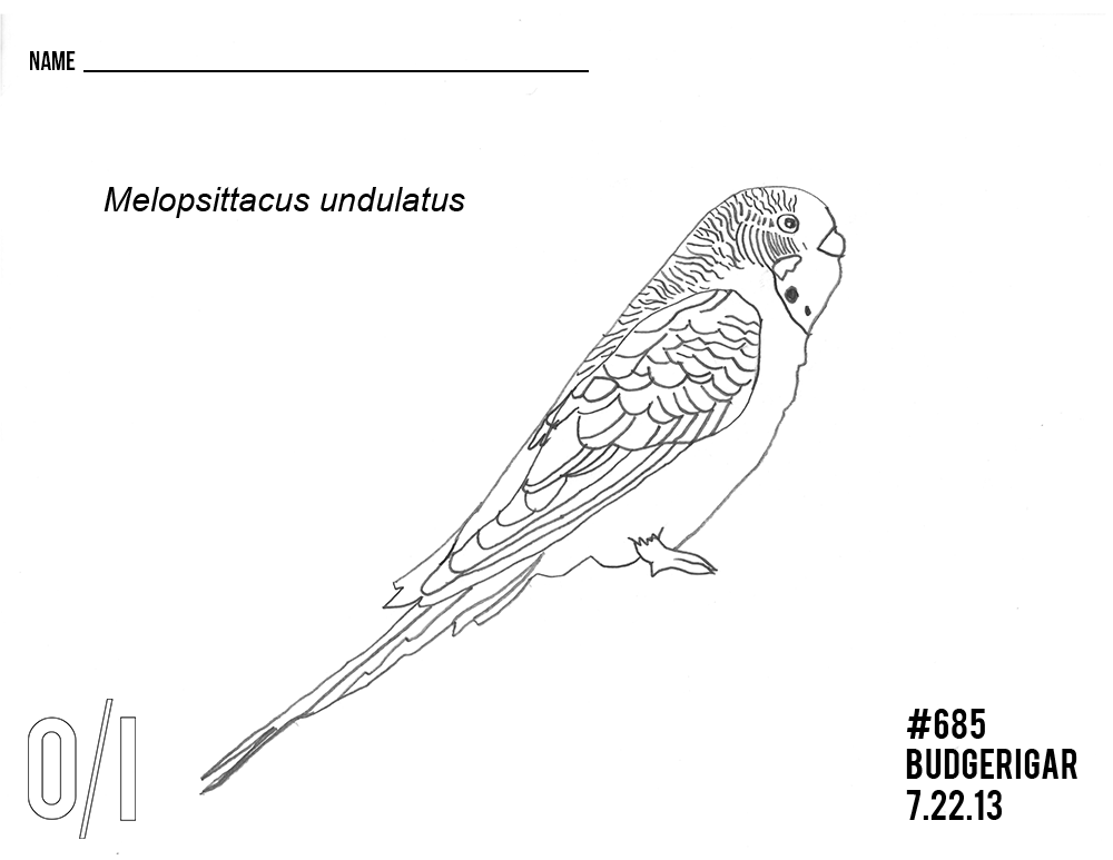 Budgerigar-coloring-page.png