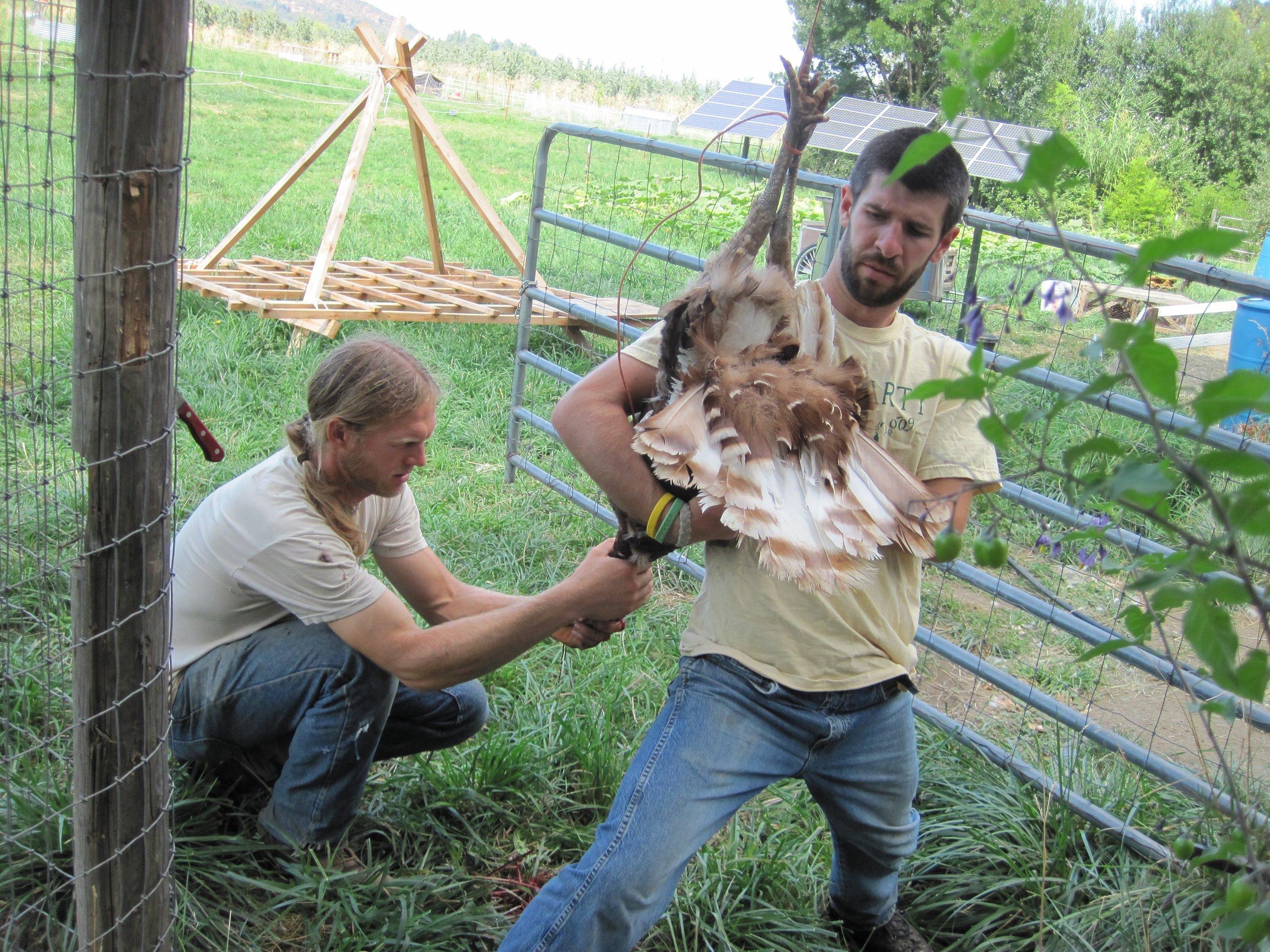 Ian West holding one of the turkeys.