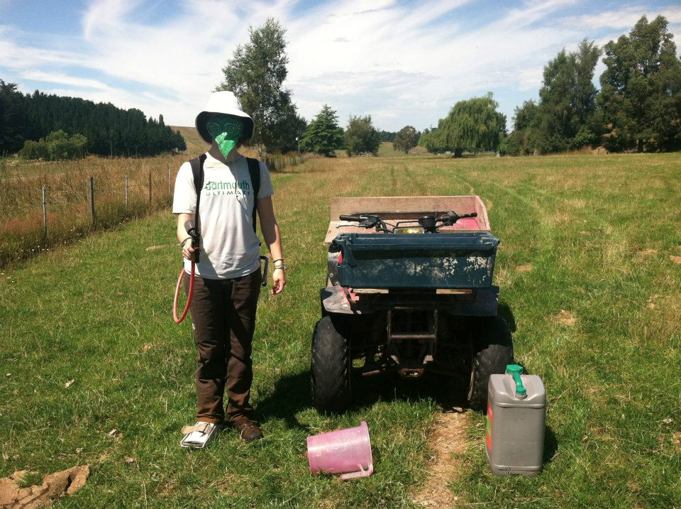 "Shea getting ready to spray herbicide on the ""organic"" sheep farm."