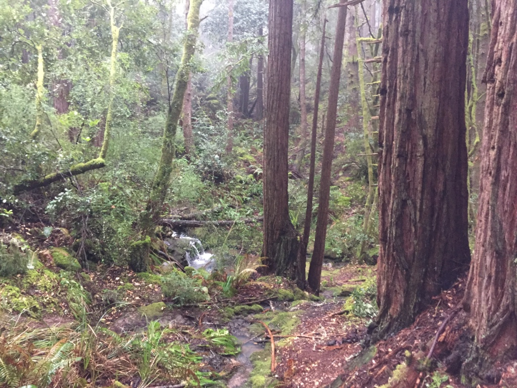 Salt Point Park in Sonoma Valley California is an oak and pine forest perched on the Pacific Coast. It's a mecca for mushroom hunters—and one of the few parks that permit foraging in California. | Photo by Barbara Paulsen