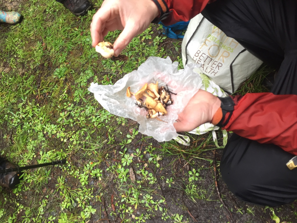 It's extremely important to keep the entire mushroom intact for correct identification, as Donna Davis learned when a bit of poisonous mushroom contaminated an entire bag of edible mushrooms. | Photo: Barbara Paulsen