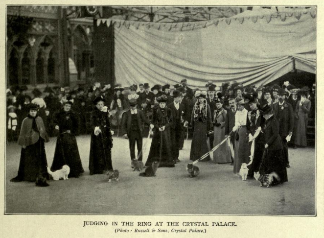 the first cat show at the crystal palace via  the book of the cat