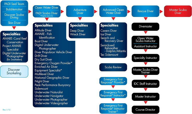 padi-education-chart